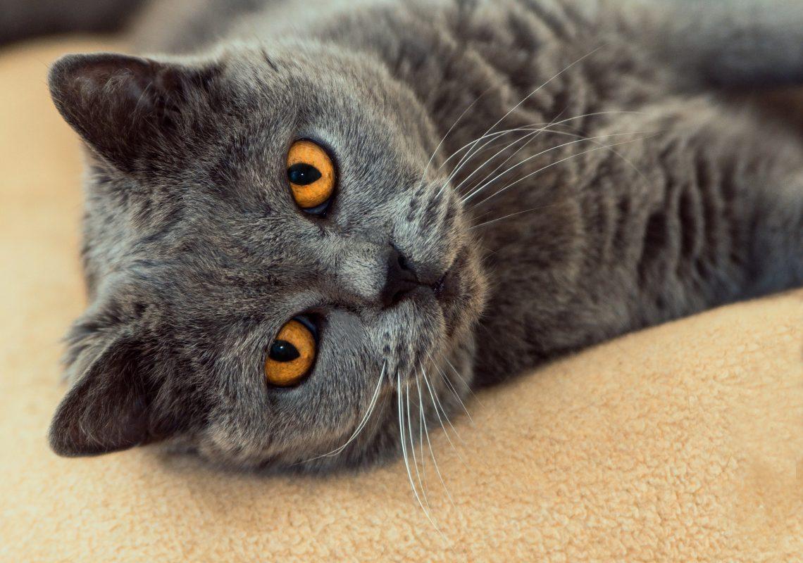 Animaux esperce - Comment couper les griffes de son chat ...