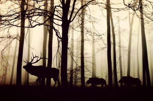 Les animaux, obligés de vivre la nuit... À cause de nous